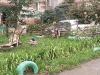 """Конкурс """"На лучший двор, дом, подъезд, балкон"""" 2008 16"""